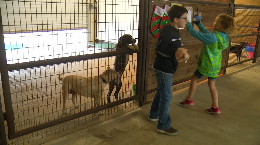 Pet Adoption of Cuero shares holiday cheer with pet stockings