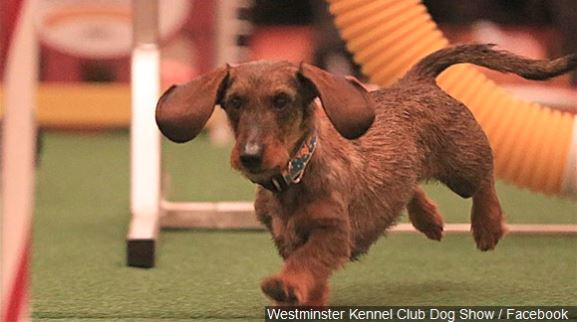 Dog DNA testing takes off, and generates debate