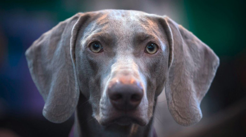 FDA warns pet owners of possible salmonella contamination in Darwin's Natural Pet Products