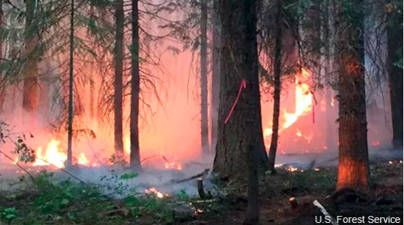 Foresters warn of high fire danger in Oklahoma and Texas