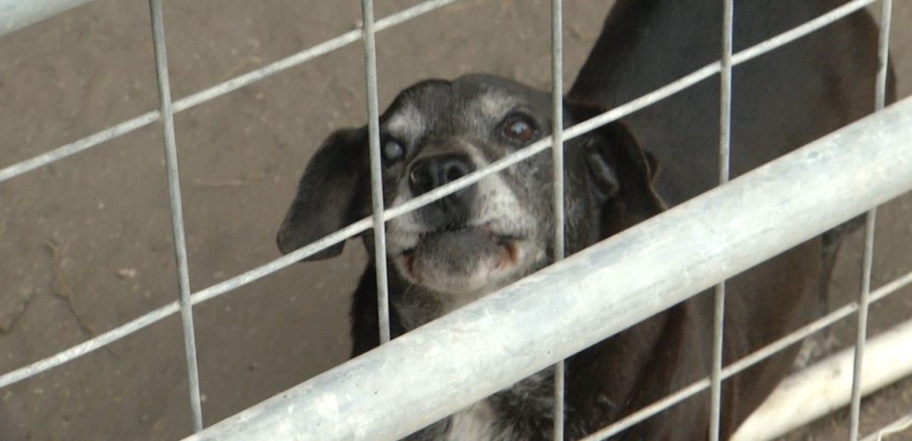 Goliad Pet Adoptions offers free spay and neuter services to residents