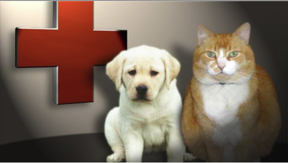 Local vets are teaming up to protect pets against rabies