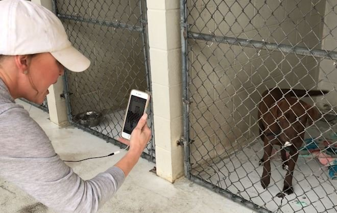 Victoria woman helps give dogs a second chance at a fur-ever home