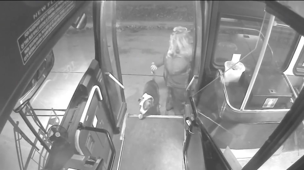 Wisconsin bus driver rescues dogs on route