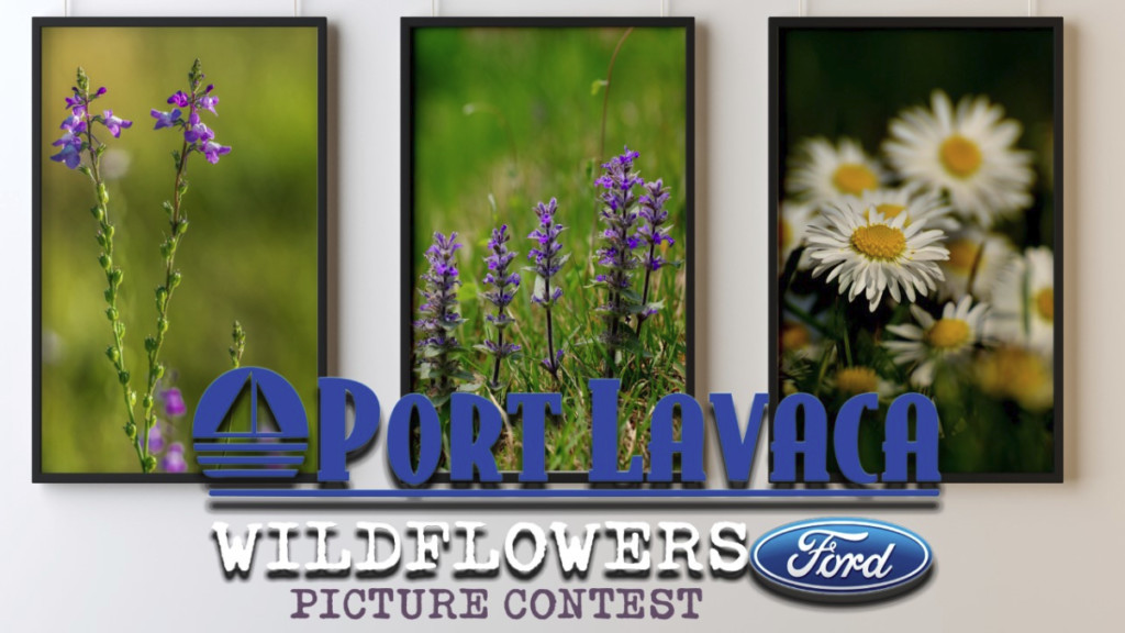 CrossroadsToday announces Wildflower Photo Contest