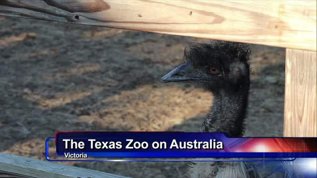 Local reaction to Australia fires by The Texas Zoo