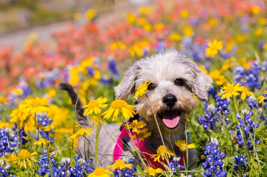 Paws up if you love wildflowers