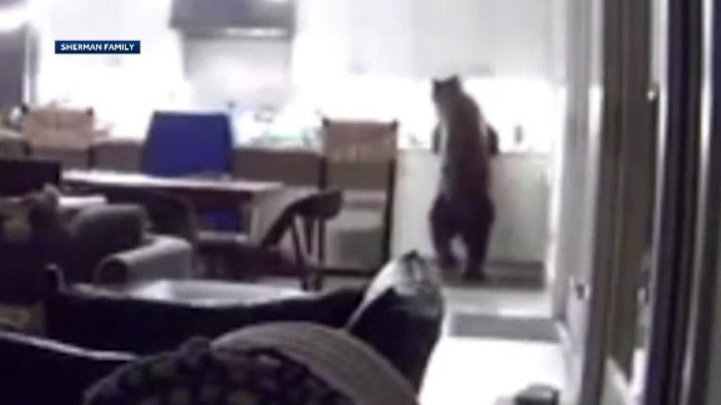 Bear breaks into house, raids fridge as teens watch