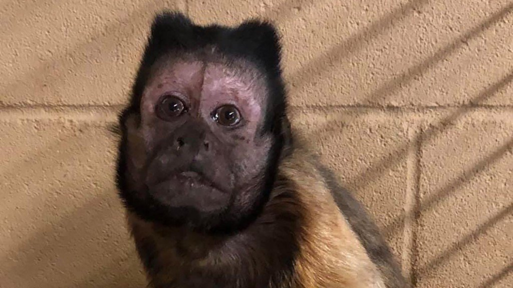 Kansas zoo's monkey dies after intruder breaks in