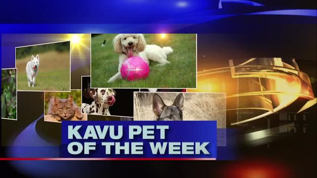 Pet of the Week (12/6/19)