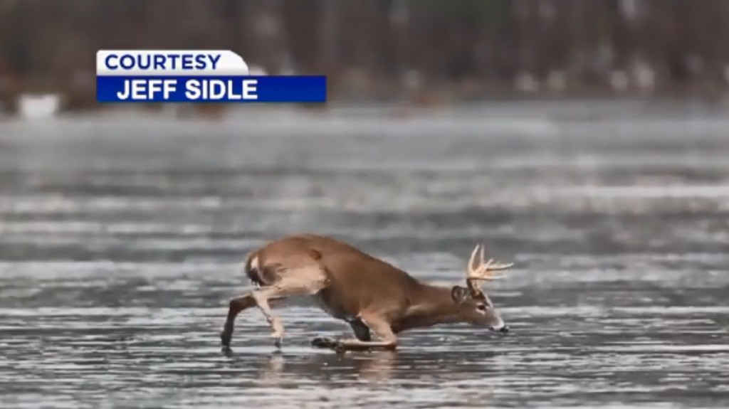 Caught on cam: Trophy buck rescued from frozen pond