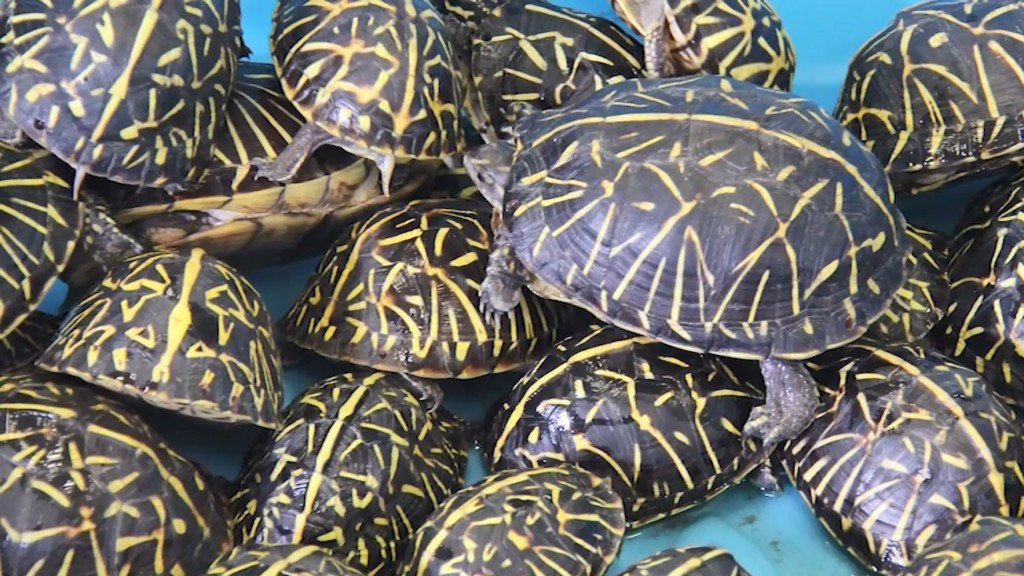 Men charged with poaching thousands of turtles