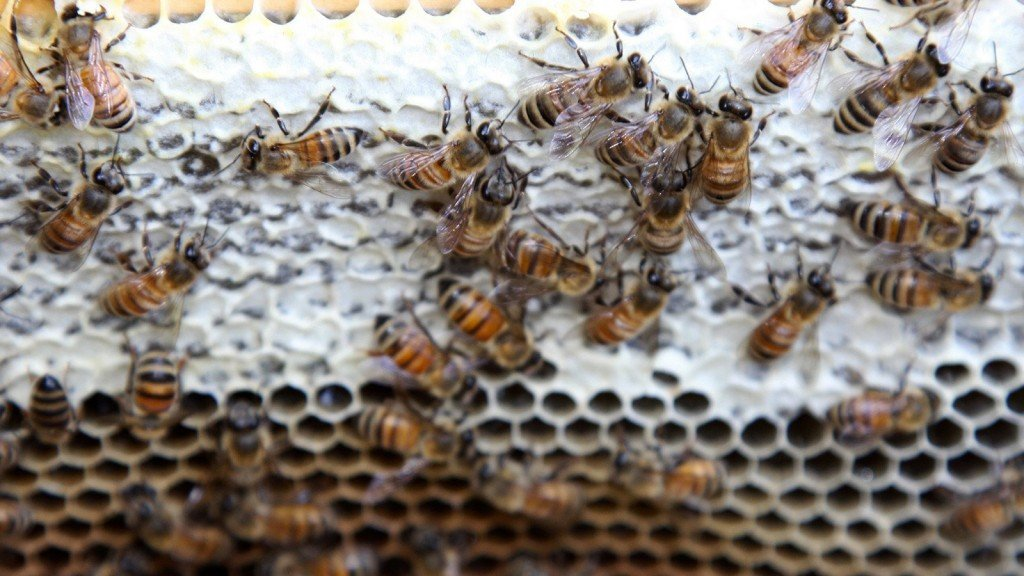 EPA expands use of pesticide that can be toxic to bees