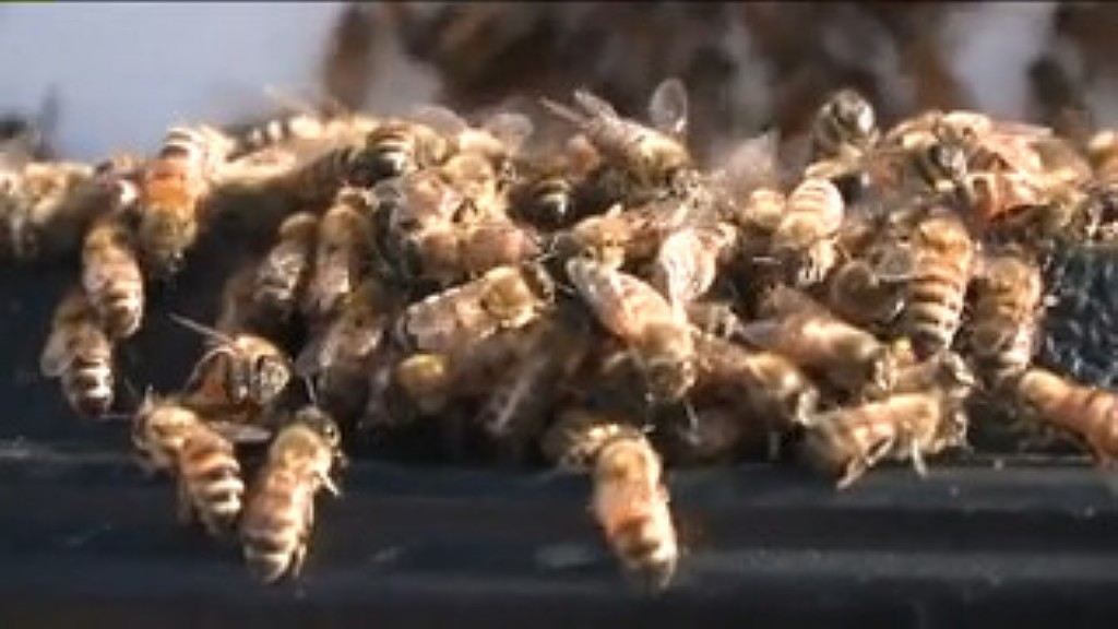 Beekeeper groups sue EPA over pesticide decision