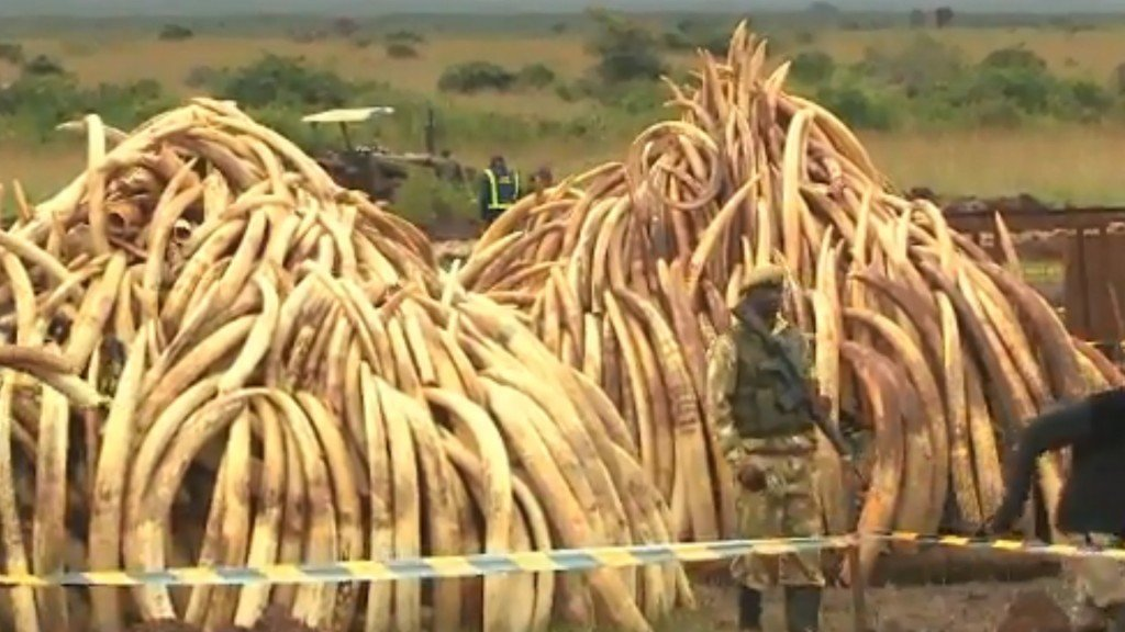 Some African countries mull selling ivory again