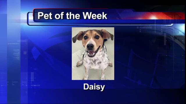 Pet of the Week (11/29)