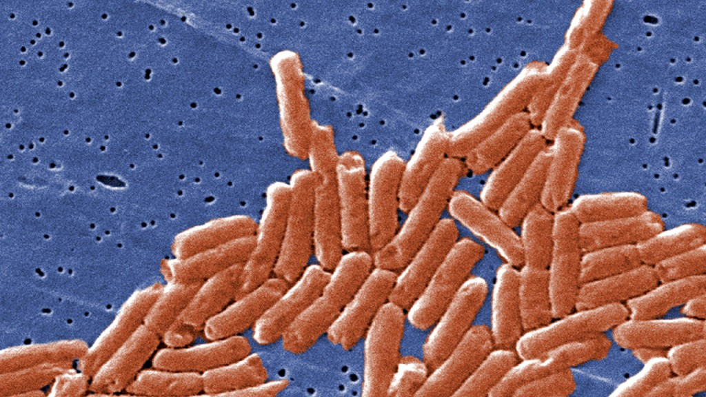 Salmonella linked to ground beef that's being recalled