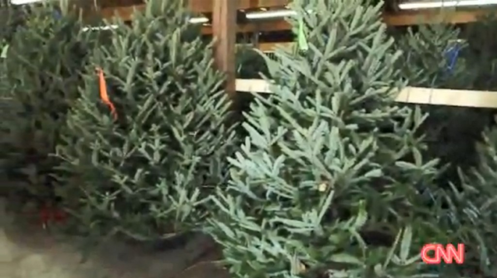 Some Christmas trees in short supply this year