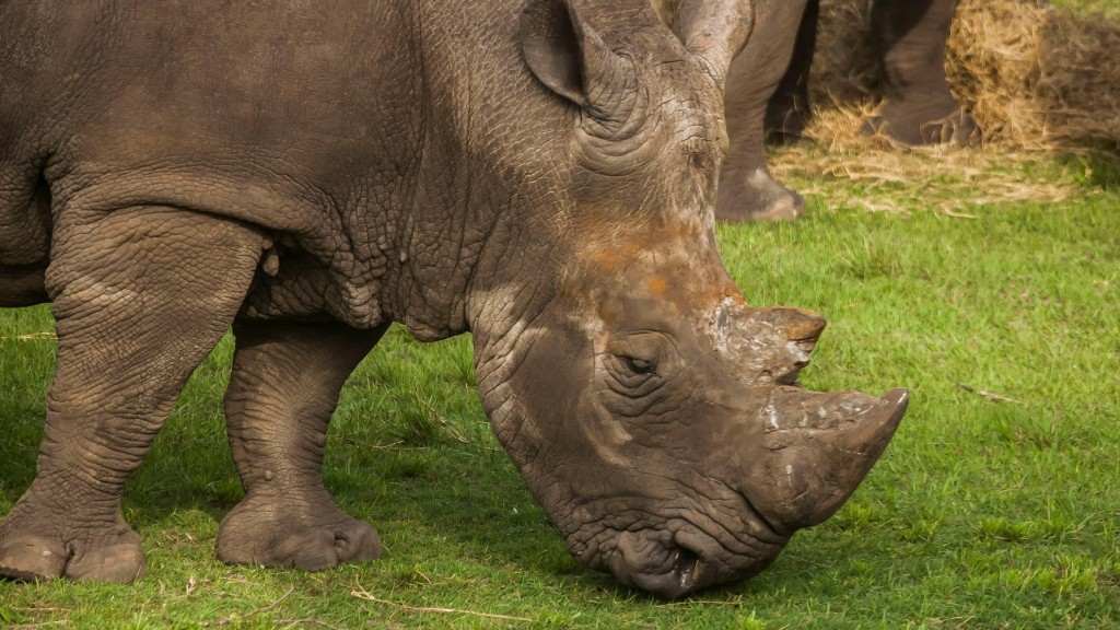 Florida zookeeper injured by rhinoceros while training