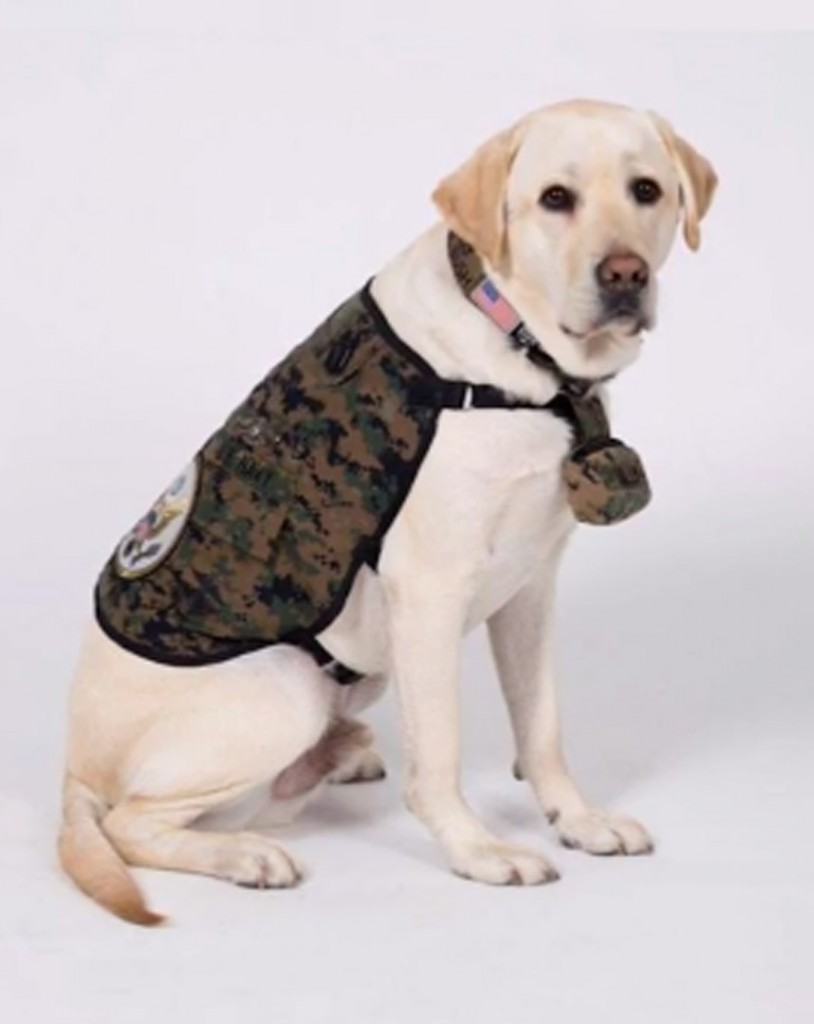George H.W. Bush's former service dog Sully has new job with Navy