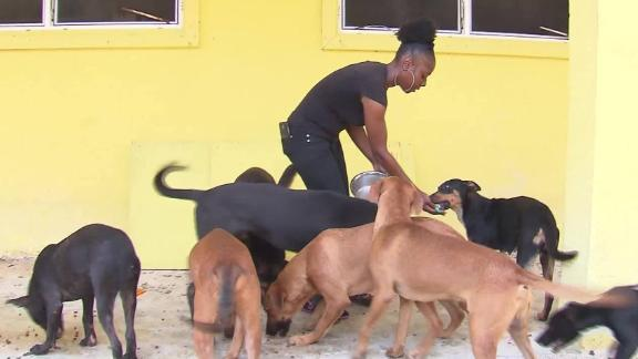 220 dogs, 50 cats died in flooding at Bahamas animal shelter