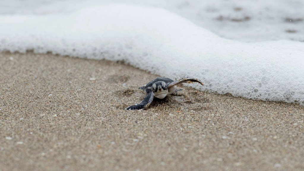 Baby sea turtles steal show at Florida beach's fireworks display