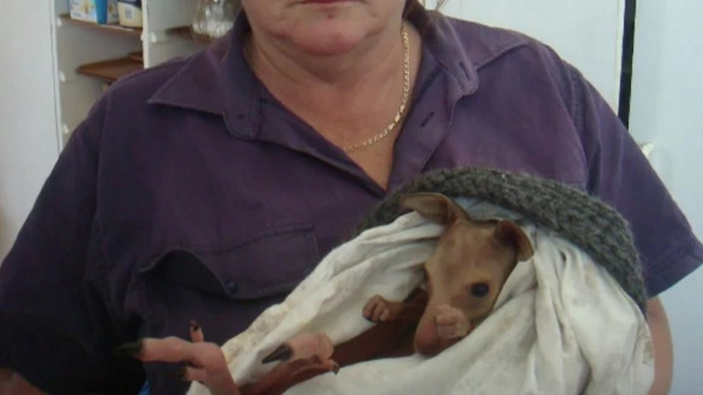 Australian community in shock after 20 kangaroos killed