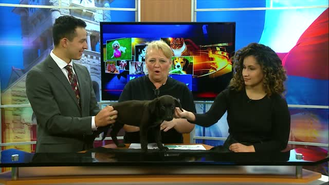 Pet Of The Week (3/13)