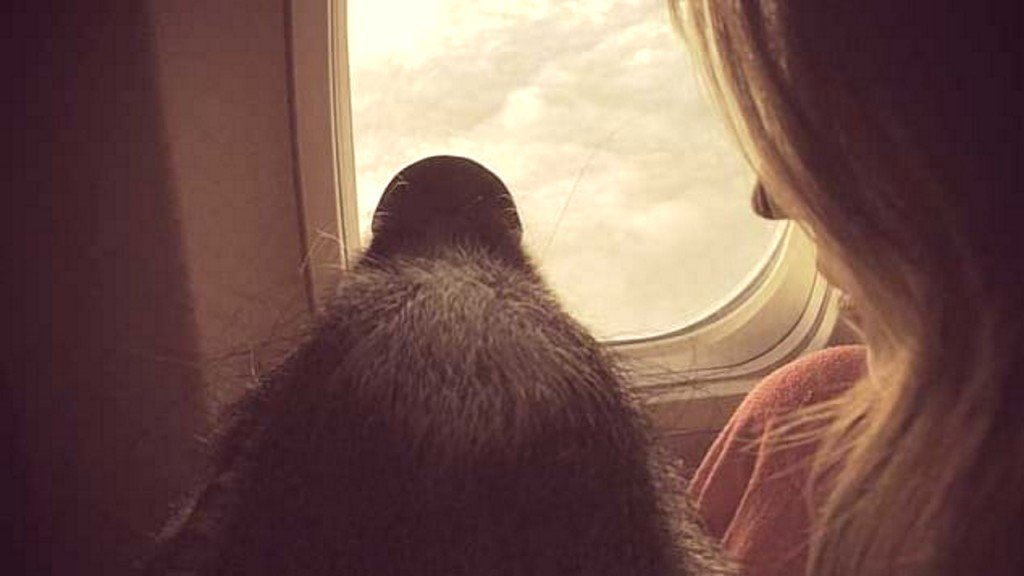 Should emotional support animals be allowed on board airplanes?