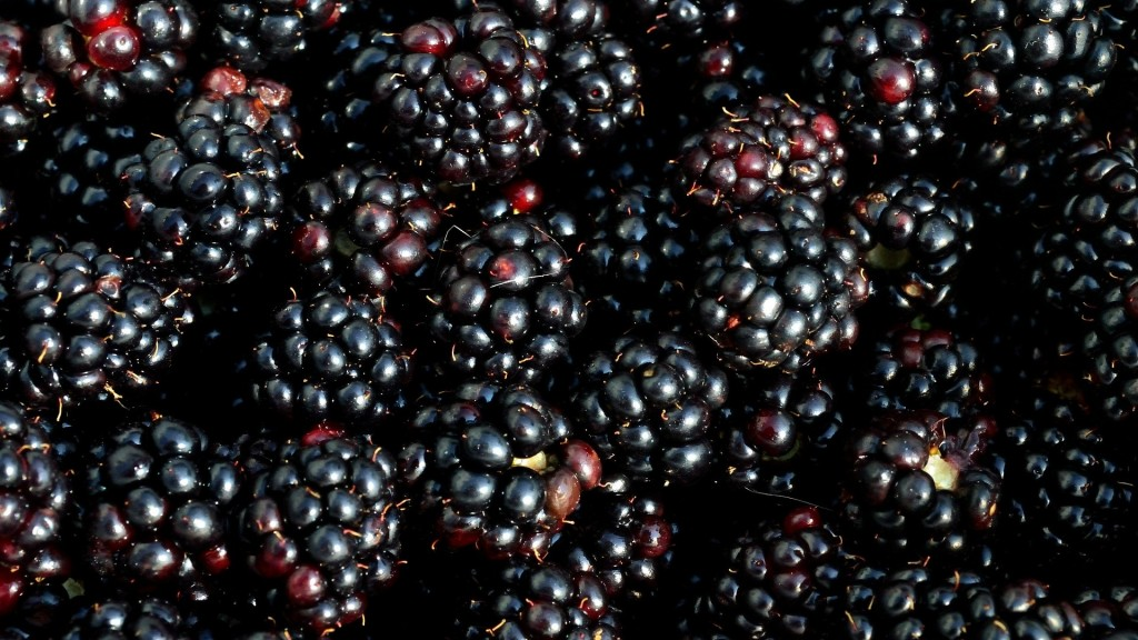 Hepatitis A outbreak 'potentially linked' to blackberries