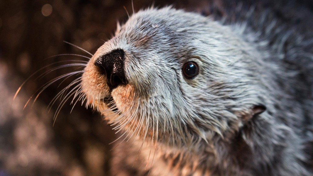 Charlie, the oldest sea otter at any zoo or aquarium, has died