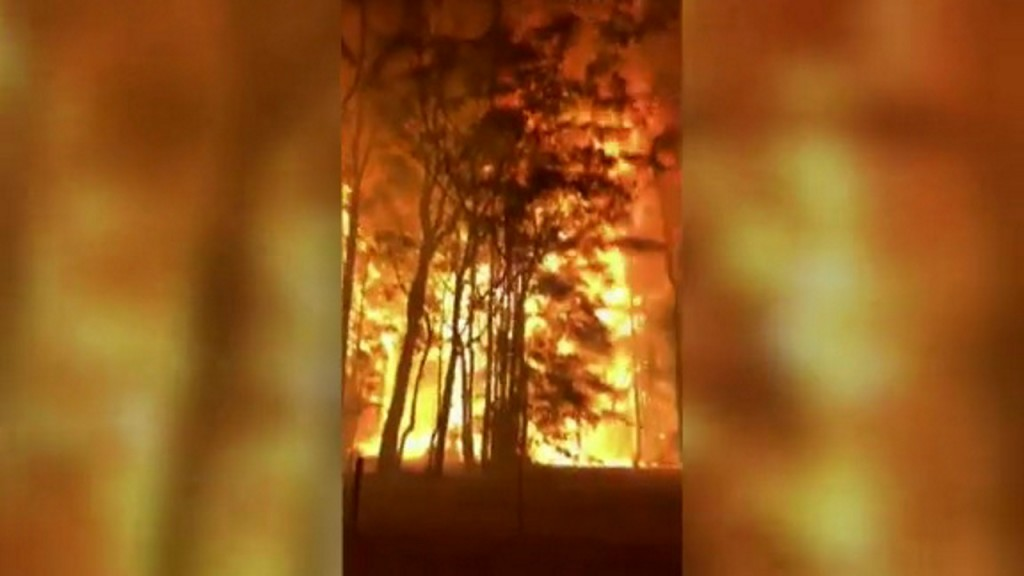 Bushfire rips through treetops near Sydney