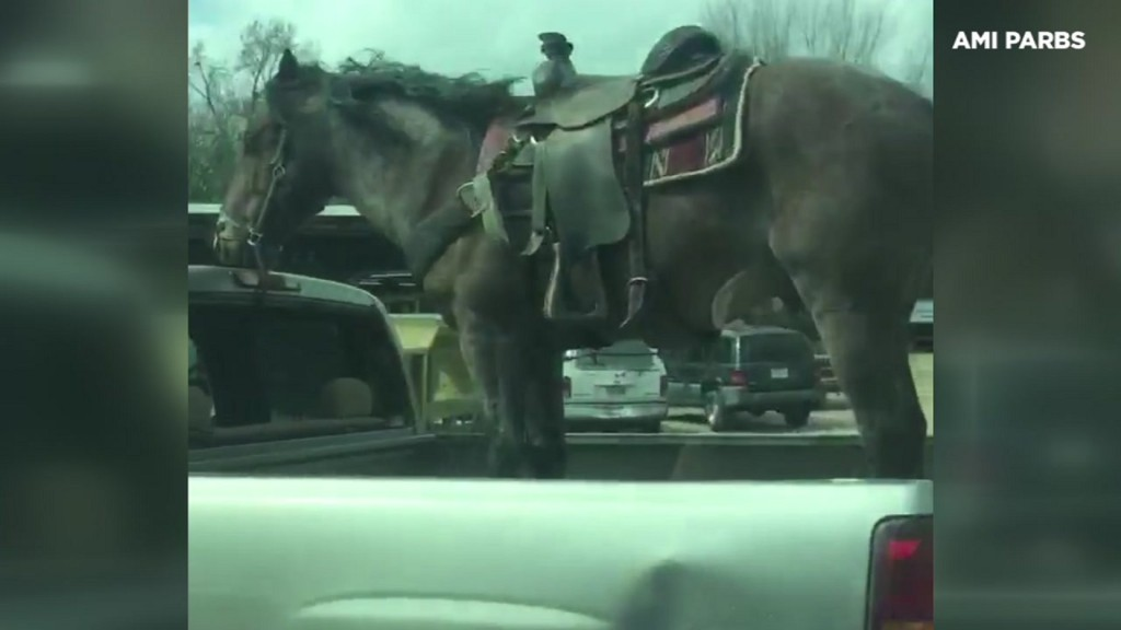 Horse spotted riding in back of pickup in Texas