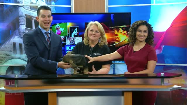 Pet Of The Week (3/6)