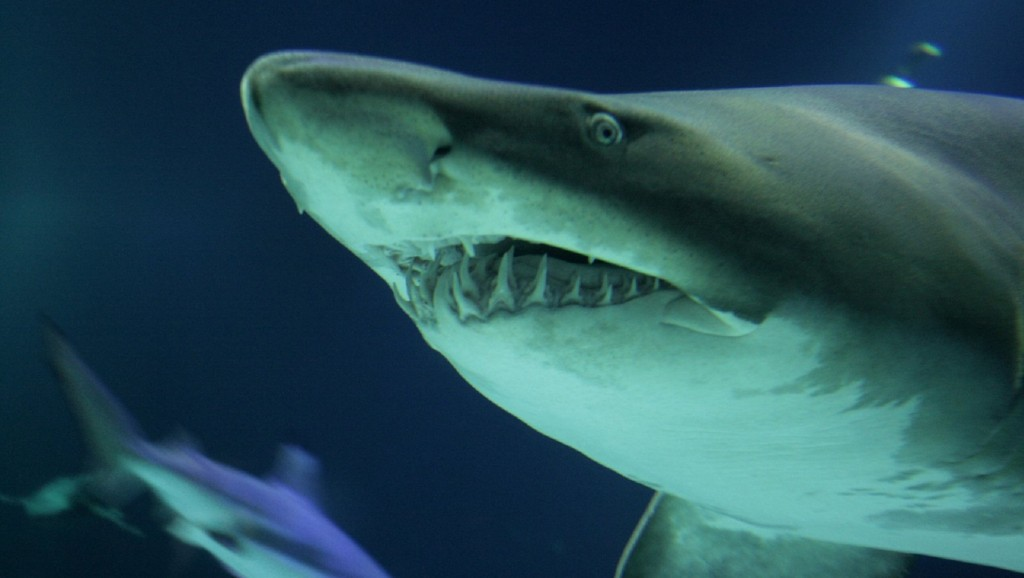 Shark bites dropped significantly last year