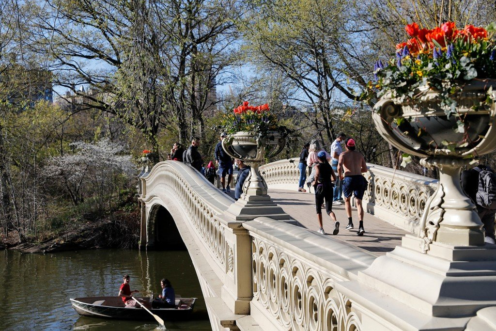 Flowers Bloom In The New York City's Central Park