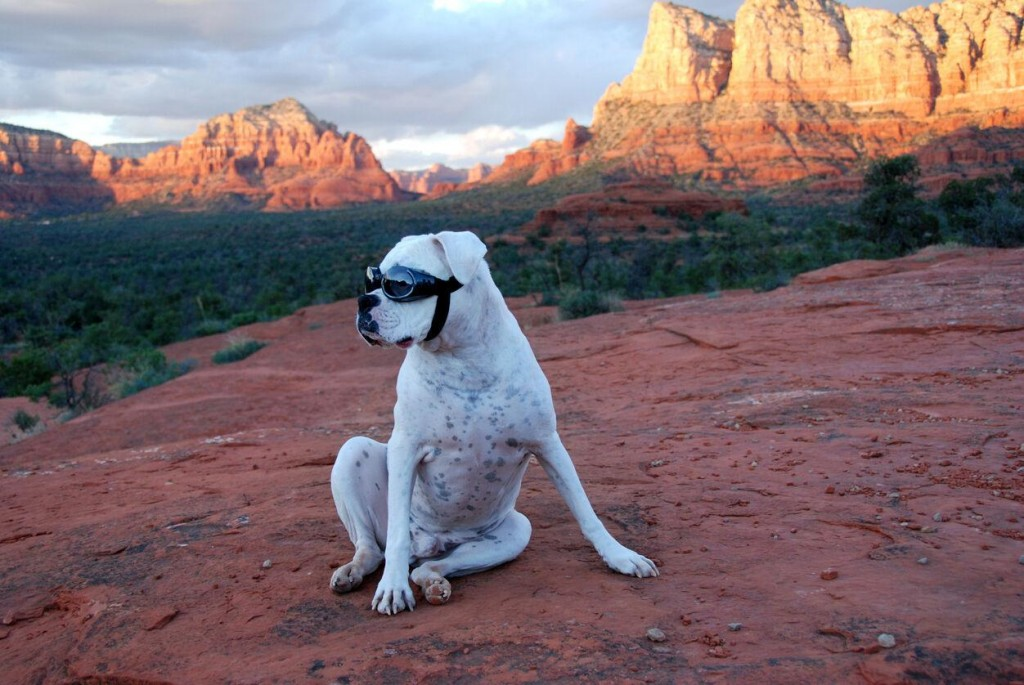 Day Tripping With Your Dog