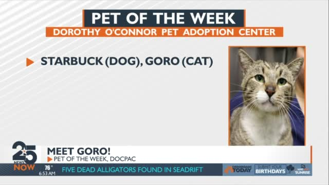 Pet Of The Week Friday 4 30 21