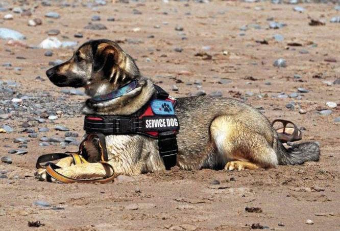 Here's How Successful Support Dogs Are Trained