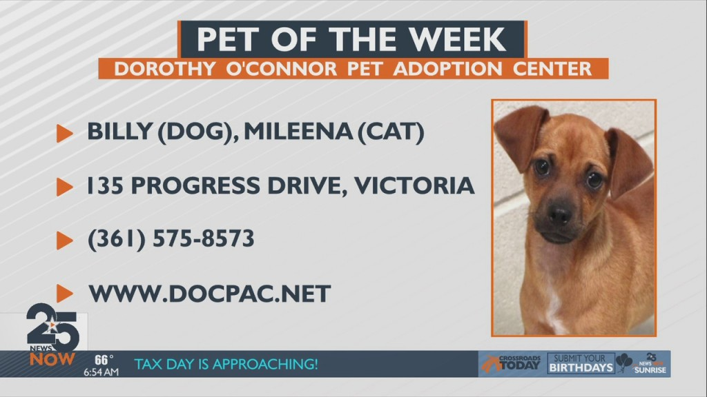 Pet Of The Week Friday 5 14 21