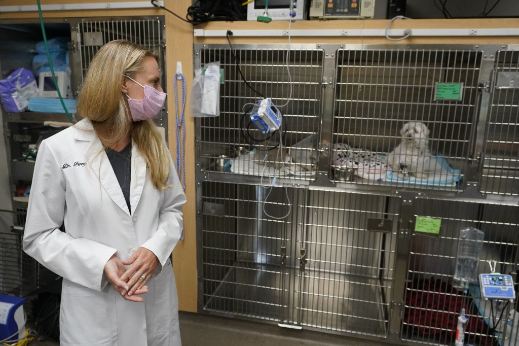 Covid 19 Pet Boom Has Veterinarians Backlogged, Burned Out