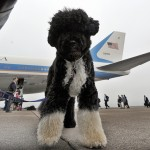 Us First Family Dog Bo Waits To Board Th