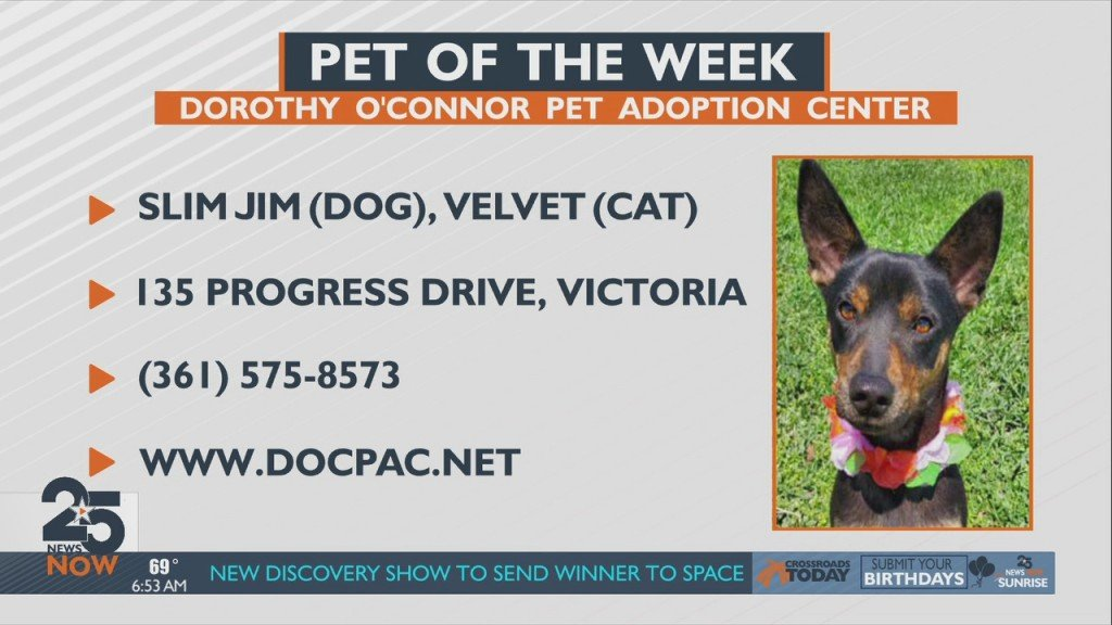 Pet Of The Week Friday 5 21 21