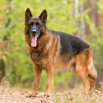 A Ranking Of The 63 Smartest Dog Breeds