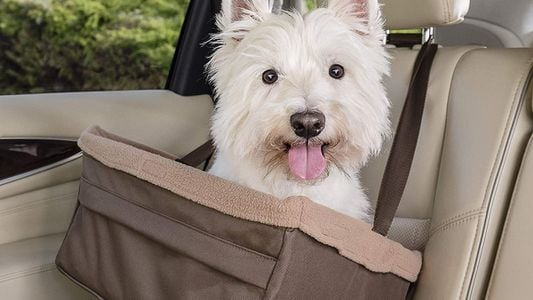 Best Dog Car Seats For 2021