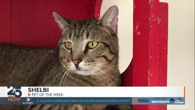 Pet Of The Week: Shelbi