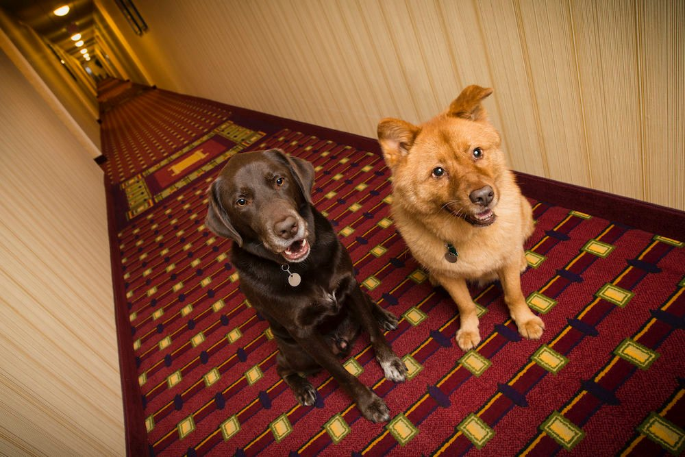 Pet Friendly Hotel Chains With Low Rates And Low (or No) Pet Fees