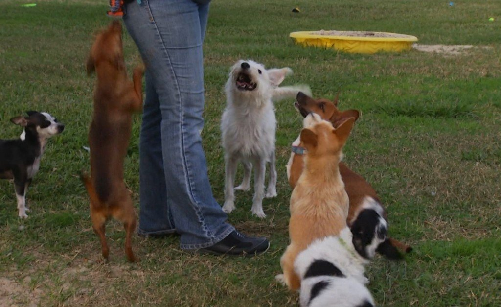 Concerned pet owners speak out