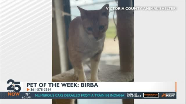 The Pet Of The Week 08 20 21