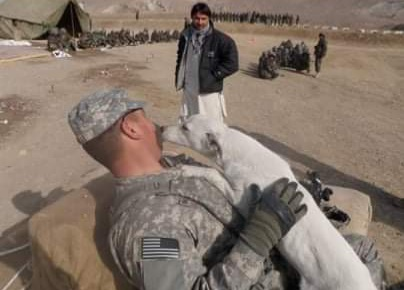 Dogs in Afghan